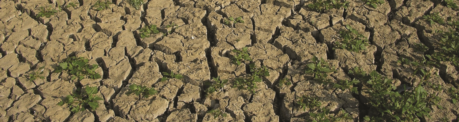 Drought. Photo - CEH Corporate, CEH